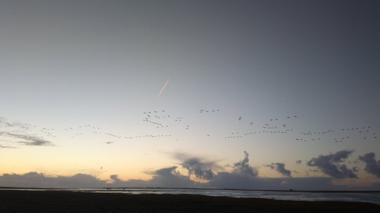 Geese in flight at Blakeney